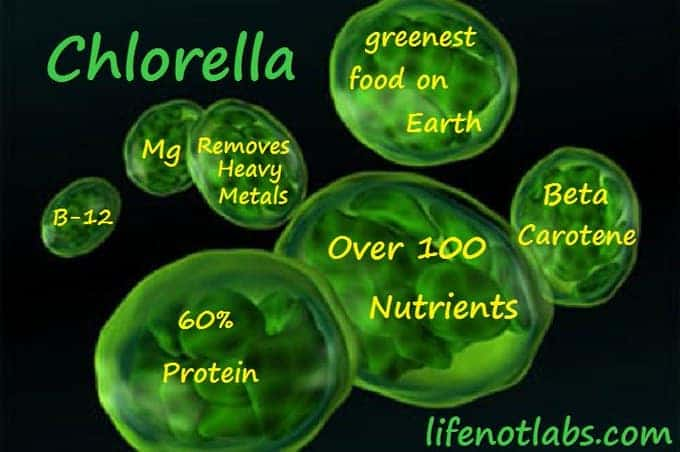 A two year self study of Chlorella's effects on the body