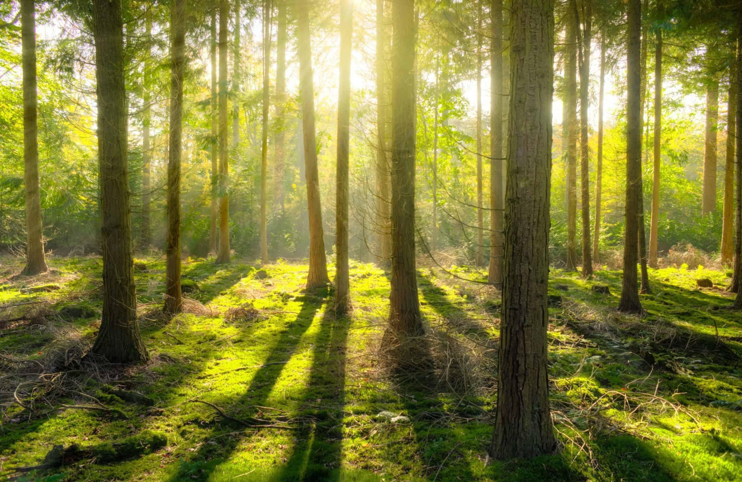 Natural vitamin D comes from lichen