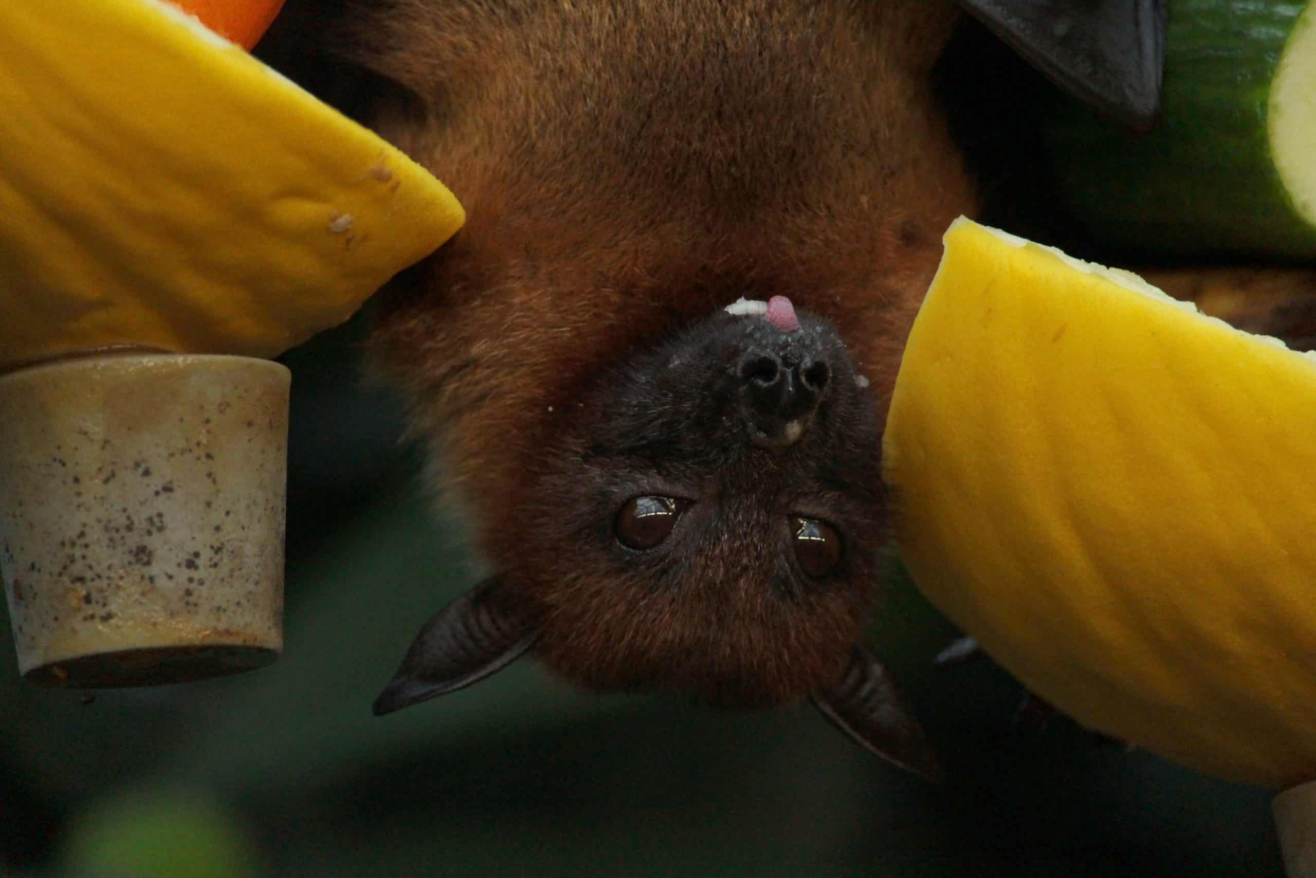 Covid-19 caused by bats